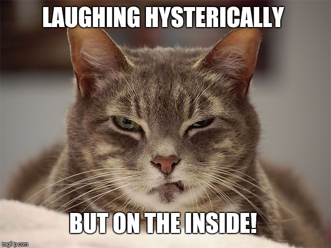 Sarcasm Cat | LAUGHING HYSTERICALLY BUT ON THE INSIDE! | image tagged in sarcasm cat | made w/ Imgflip meme maker