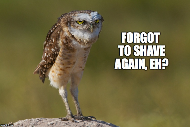 Observant Owl | FORGOT TO SHAVE AGAIN, EH? | image tagged in shaving | made w/ Imgflip meme maker