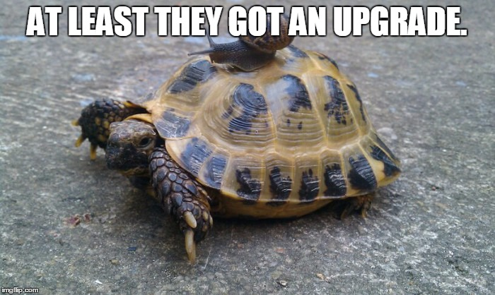 Snail riding turtle | AT LEAST THEY GOT AN UPGRADE. | image tagged in snail riding turtle | made w/ Imgflip meme maker