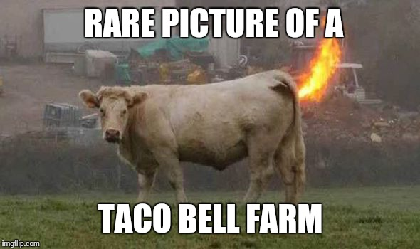It starts from the source | RARE PICTURE OF A TACO BELL FARM | image tagged in taco bell,farm,cow | made w/ Imgflip meme maker