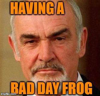 connery | HAVING A BAD DAY FROG | image tagged in connery | made w/ Imgflip meme maker