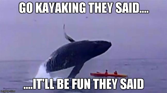 Whale Trust Fall | GO KAYAKING THEY SAID.... ....IT'LL BE FUN THEY SAID | image tagged in whale trust fall | made w/ Imgflip meme maker
