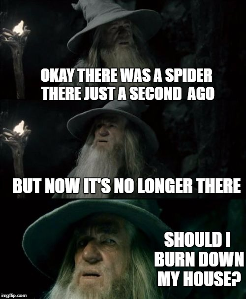 Confused Gandalf Meme | OKAY THERE WAS A SPIDER THERE JUST A SECOND  AGO BUT NOW IT'S NO LONGER THERE SHOULD I BURN DOWN MY HOUSE? | image tagged in memes,confused gandalf | made w/ Imgflip meme maker