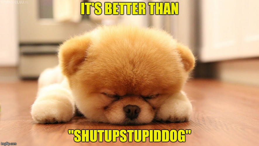 "Sleeping dog | IT'S BETTER THAN ""SHUTUPSTUPIDDOG"" 
