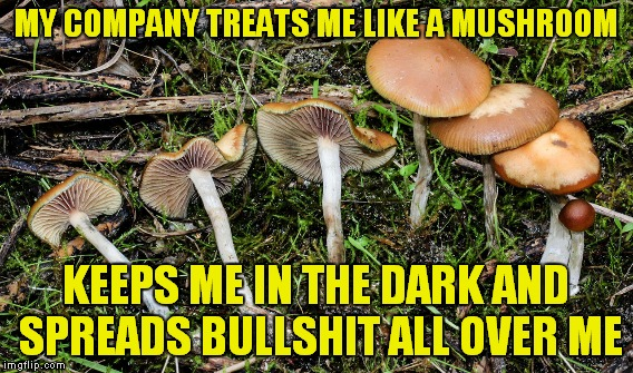 MY COMPANY TREATS ME LIKE A MUSHROOM KEEPS ME IN THE DARK AND SPREADS BULLSHIT ALL OVER ME | made w/ Imgflip meme maker