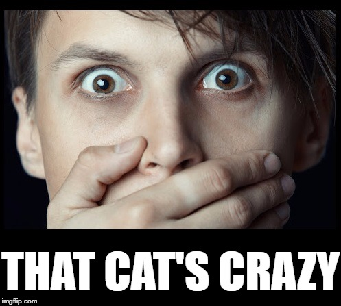 oh my | THAT CAT'S CRAZY | image tagged in oh my | made w/ Imgflip meme maker