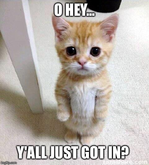 Cute Cat Meme | O HEY... Y'ALL JUST GOT IN? | image tagged in memes,cute cat | made w/ Imgflip meme maker