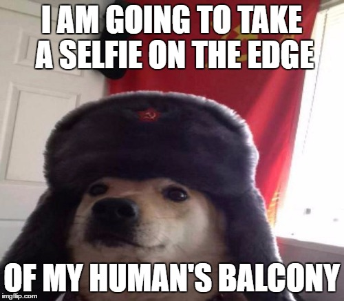 I AM GOING TO TAKE A SELFIE ON THE EDGE OF MY HUMAN'S BALCONY | made w/ Imgflip meme maker