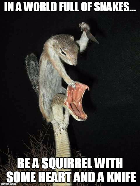 IN A WORLD FULL OF SNAKES... BE A SQUIRREL WITH SOME HEART AND A KNIFE | image tagged in bad-ass squirrel | made w/ Imgflip meme maker