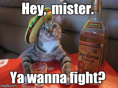 Tequila | Hey,  mister. Ya wanna fight? | image tagged in tequila | made w/ Imgflip meme maker