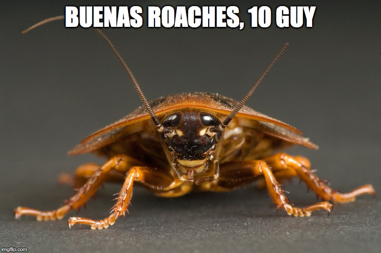 BUENAS ROACHES, 10 GUY | made w/ Imgflip meme maker