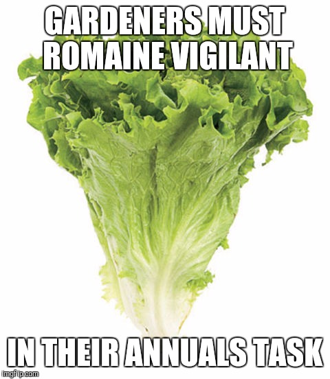 GARDENERS MUST ROMAINE VIGILANT IN THEIR ANNUALS TASK | made w/ Imgflip meme maker