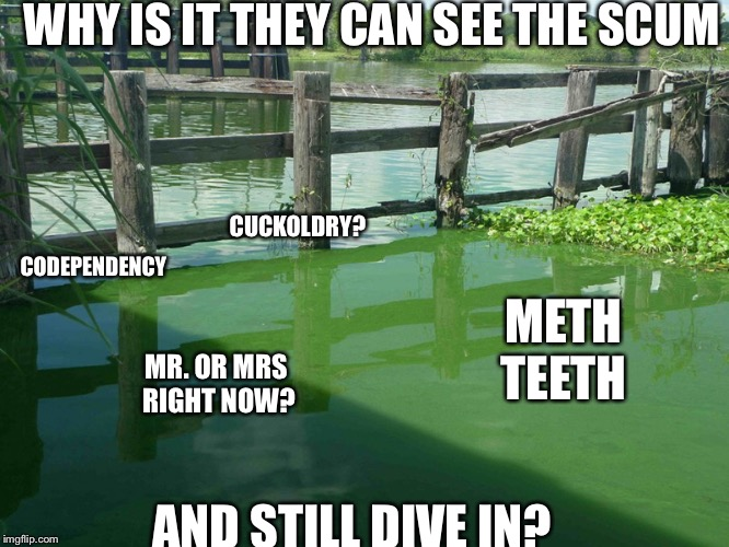 Algae | WHY IS IT THEY CAN SEE THE SCUM AND STILL DIVE IN? CODEPENDENCY MR. OR MRS RIGHT NOW? CUCKOLDRY? METH TEETH | image tagged in algae | made w/ Imgflip meme maker
