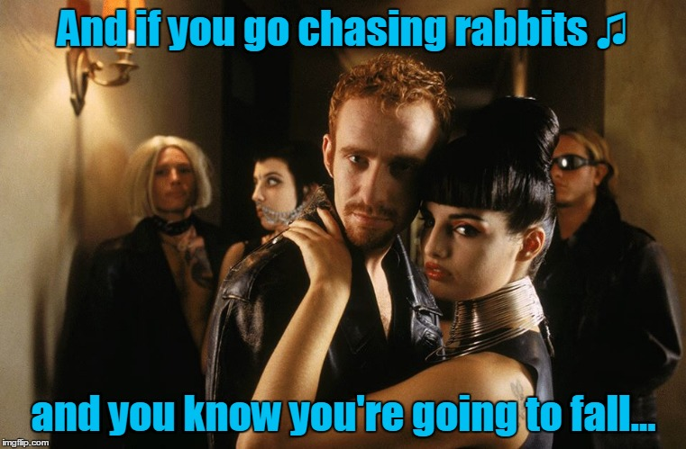 And if you go chasing rabbits ♫ and you know you're going to fall... | made w/ Imgflip meme maker