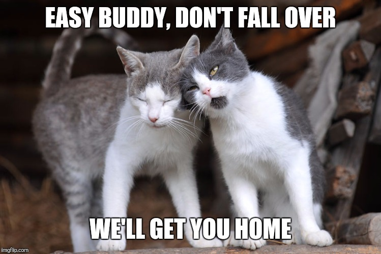OCD Cat | EASY BUDDY, DON'T FALL OVER WE'LL GET YOU HOME | image tagged in ocd cat | made w/ Imgflip meme maker