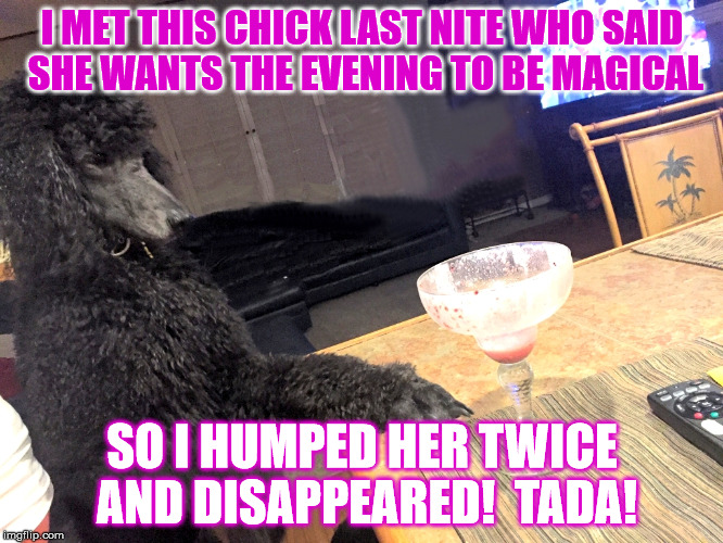 Noah Gump's time as a magician. | I MET THIS CHICK LAST NITE WHO SAID SHE WANTS THE EVENING TO BE MAGICAL SO I HUMPED HER TWICE AND DISAPPEARED!  TADA! | image tagged in noah gump at bar,magic legs,standard poodle,phoenix,strawberry daquiri,funny memes | made w/ Imgflip meme maker