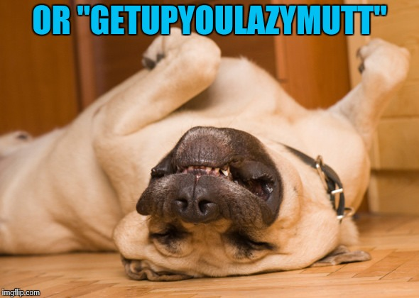 "Sleeping dog | OR ""GETUPYOULAZYMUTT"" 