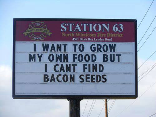 and once I do, how deep do you plant them? Bacon Week | I WANT TO GROW MY OWN FOOD BUT I CANT FIND BACON SEEDS | image tagged in bacon week,bacon,grow your own,memes,signs | made w/ Imgflip meme maker