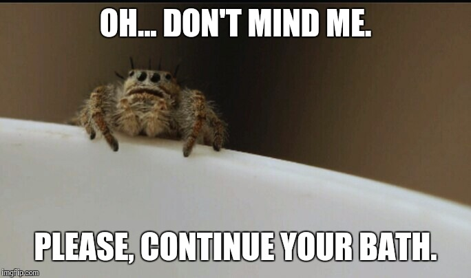 Creeper spider, watches you bathe... | OH... DON'T MIND ME. PLEASE, CONTINUE YOUR BATH. | image tagged in bath time,scumbag spider,creeper,heavy breathing | made w/ Imgflip meme maker