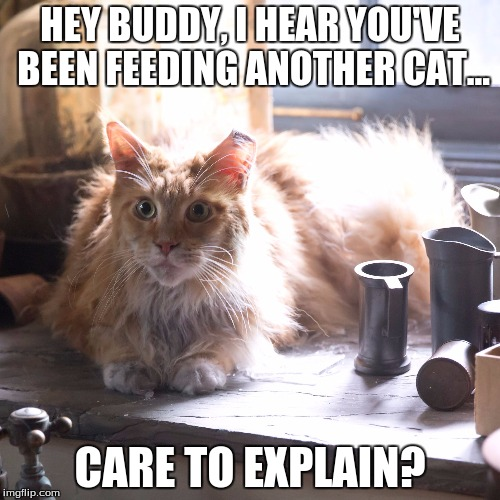 HEY BUDDY, I HEAR YOU'VE BEEN FEEDING ANOTHER CAT... CARE TO EXPLAIN? | image tagged in chill katniss | made w/ Imgflip meme maker