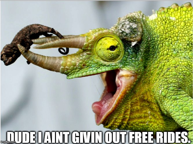 DUDE I AINT GIVIN OUT FREE RIDES. | image tagged in blizzard,green horn,free rides | made w/ Imgflip meme maker