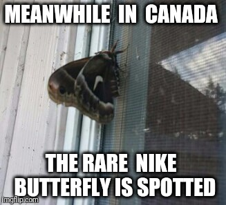 Just do it, butterfly. | MEANWHILE  IN  CANADA THE RARE  NIKE  BUTTERFLY IS SPOTTED | image tagged in meanwhile in canada,canada,butterfly | made w/ Imgflip meme maker