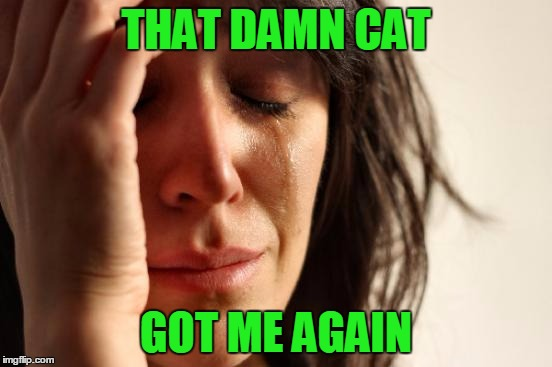 First World Problems Meme | THAT DAMN CAT GOT ME AGAIN | image tagged in memes,first world problems | made w/ Imgflip meme maker