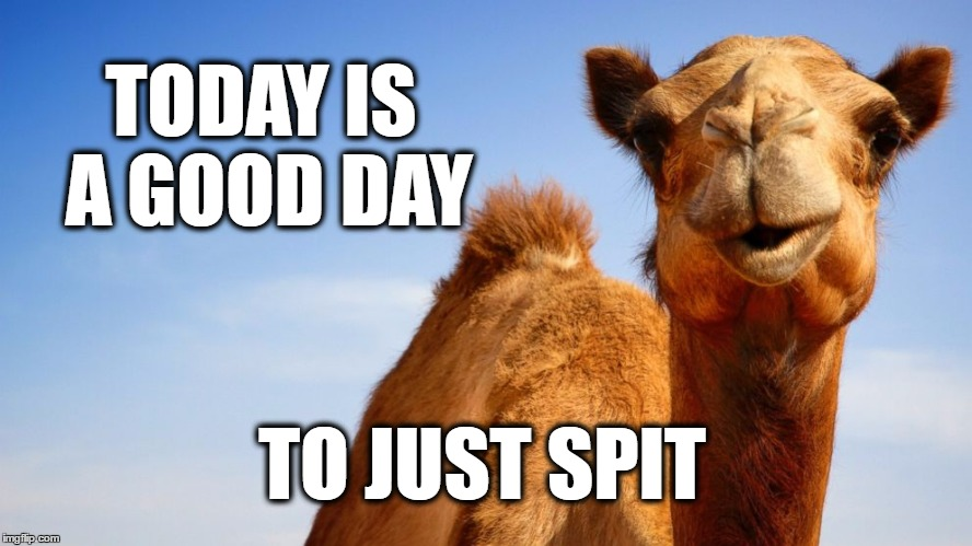 TODAY IS A GOOD DAY TO JUST SPIT | image tagged in hump day camel,sarcastic camel,camel,camel toe,wednesday,spit | made w/ Imgflip meme maker