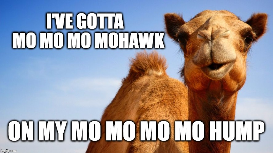 I'VE GOTTA  MO MO MO MOHAWK; ON MY MO MO MO MO HUMP | image tagged in camel,mohawk,retrohair,fur,hair flip | made w/ Imgflip meme maker