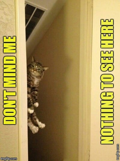Cat Lurking  | G | image tagged in cat,funny | made w/ Imgflip meme maker