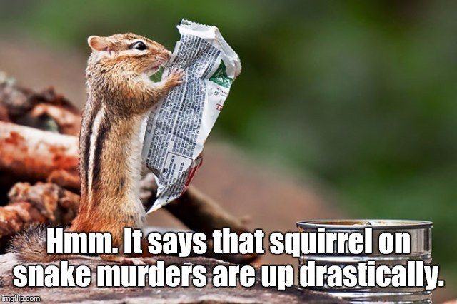 zz86x.jpg | Hmm. It says that squirrel on snake murders are up drastically. | image tagged in zz86xjpg | made w/ Imgflip meme maker