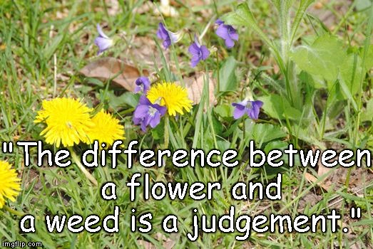 "Flowers Or Weeds | ""The difference between a flower and a weed is a judgement."" 