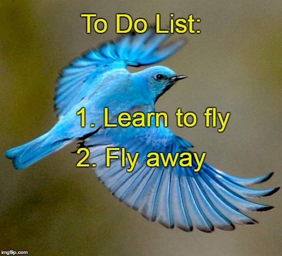 To Do List: 2. Fly away 1. Learn to fly | image tagged in to do list,learn,fly | made w/ Imgflip meme maker
