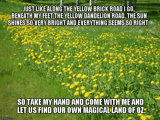 Yellow Dandelion Road | JUST LIKE ALONG THE YELLOW BRICK ROAD I GO, BENEATH MY FEET THE YELLOW DANDELION ROAD. THE SUN SHINES SO VERY BRIGHT AND EVERYTHING SEEMS SO | image tagged in dandelions,yellow brick road,land of oz | made w/ Imgflip meme maker