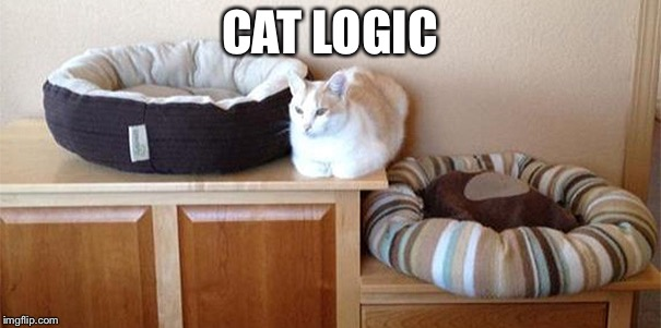 Cat Logic | CAT LOGIC | image tagged in cats,logic,lol | made w/ Imgflip meme maker