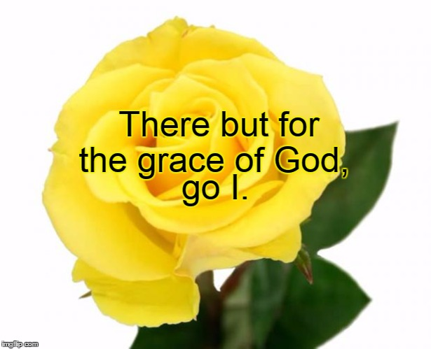 There but for the grace of God, go I. | image tagged in yellow rose of friendship | made w/ Imgflip meme maker