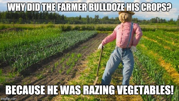 Bad pun scarecrow | WHY DID THE FARMER BULLDOZE HIS CROPS? BECAUSE HE WAS RAZING VEGETABLES! | image tagged in scarecrow in field,farmer,bad pun | made w/ Imgflip meme maker