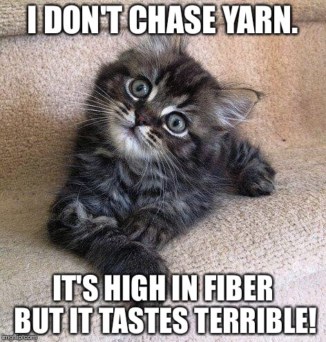 Smarty kitty | I DON'T CHASE YARN. IT'S HIGH IN FIBER BUT IT TASTES TERRIBLE! | image tagged in cute kittens | made w/ Imgflip meme maker