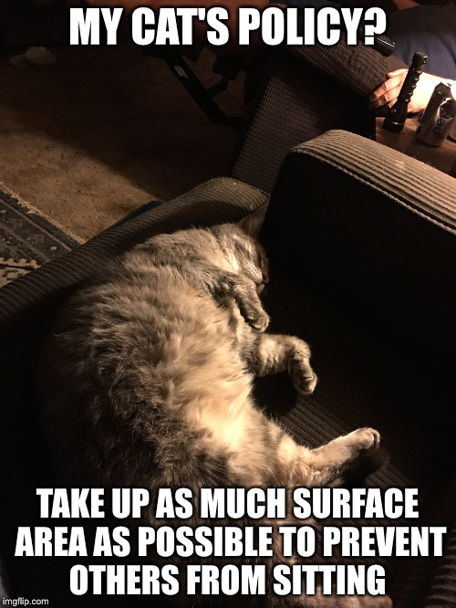 Sleeping Cat | MY CAT'S POLICY? TAKE UP AS MUCH SURFACE AREA AS POSSIBLE TO PREVENT OTHERS FROM SITTING | image tagged in cats,sleep,couch | made w/ Imgflip meme maker