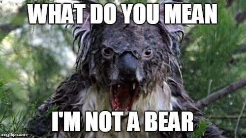 Angry Koala | WHAT DO YOU MEAN I'M NOT A BEAR | image tagged in memes,angry koala | made w/ Imgflip meme maker