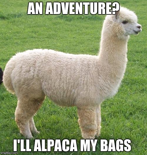I'LL ALPACA MY BAGS | image tagged in alpaca my bags