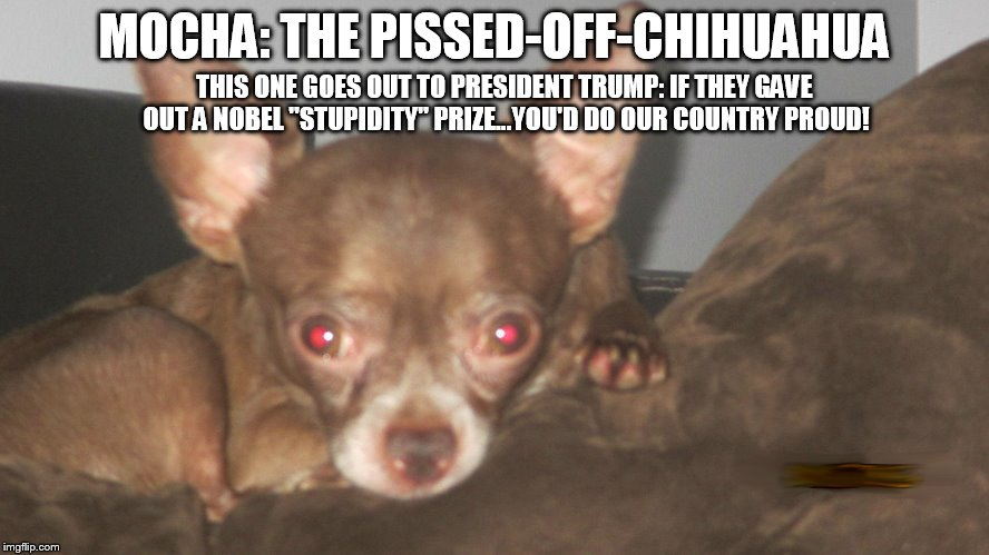 "MOCHA: THE PISSED-OFF-CHIHUAHUA THIS ONE GOES OUT TO PRESIDENT TRUMP: IF THEY GAVE OUT A NOBEL ""STUPIDITY"" PRIZE...YOU'D DO OUR COUNTRY PROU 