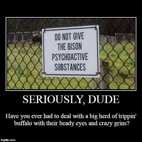 now, as for the owner... | SERIOUSLY, DUDE | Have you ever had to deal with a big herd of trippin' buffalo with their beady eyes and crazy grins? | image tagged in funny,demotivationals | made w/ Imgflip demotivational maker