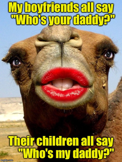 "Slutty Camel |  My boyfriends all say  ""Who's your daddy?""; Their children all say     ""Who's my daddy?"" 