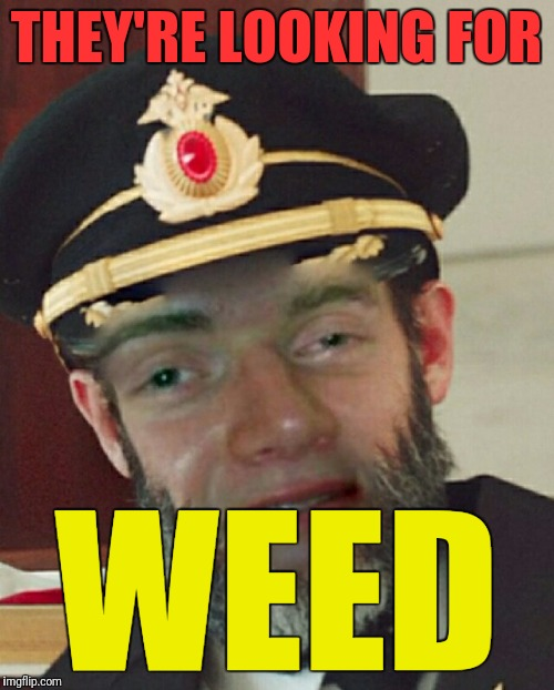 Captain Oblivious | THEY'RE LOOKING FOR WEED | image tagged in captain oblivious | made w/ Imgflip meme maker
