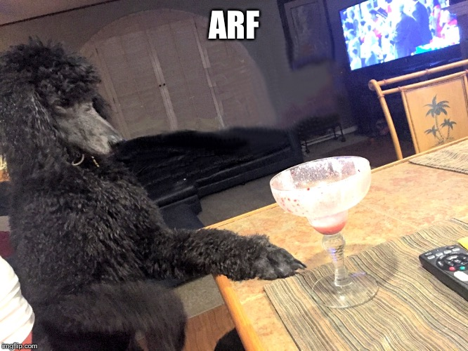 Noah Gump at Bar | ARF | image tagged in noah gump at bar | made w/ Imgflip meme maker