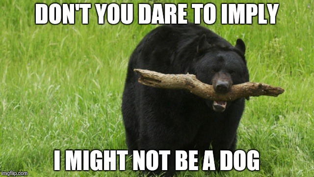 Identity Crisis | DON'T YOU DARE TO IMPLY I MIGHT NOT BE A DOG | image tagged in bear with stick,funny,memes,bear,dog | made w/ Imgflip meme maker