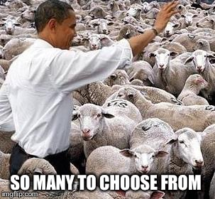 obama sheep | SO MANY TO CHOOSE FROM | image tagged in obama sheep | made w/ Imgflip meme maker