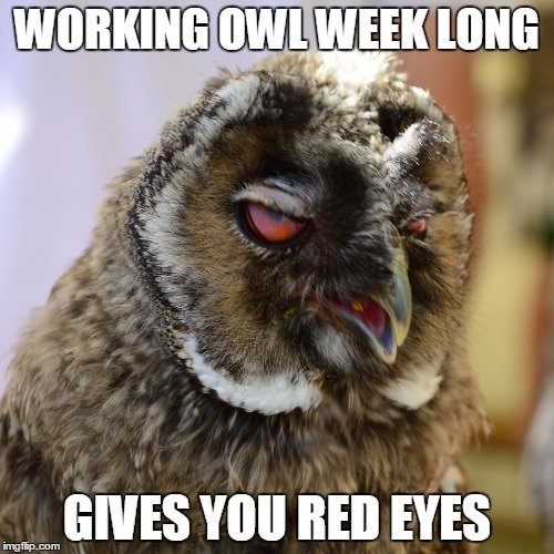 WORKING OWL WEEK LONG GIVES YOU RED EYES | image tagged in grumpy owl | made w/ Imgflip meme maker