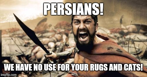 Sparta Leonidas Meme | PERSIANS! WE HAVE NO USE FOR YOUR RUGS AND CATS! | image tagged in memes,sparta leonidas | made w/ Imgflip meme maker